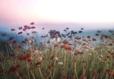 Discover & share this Animated GIF with everyone you know. GIPHY is how you search, share, discover, and create GIFs. Beau Gif, Nature Gif, Cinemagraph, Gif Animé, Animated Gif, Aesthetic Gif, Mother Nature, Wild Flowers, Flowers Gif