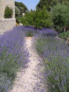 Mediterraner Garten - muenchenarchitektur Garden Oasis, Home And Garden, Provence Garden, Garden Plants, Most Beautiful Pictures, Luxury Homes, Sidewalk, Country Roads, Pop Art