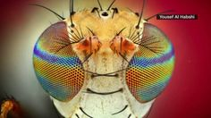 The beauty of bugs - CNN Video