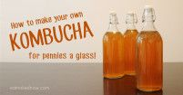 How to make your own Kombucha for pennies a glass