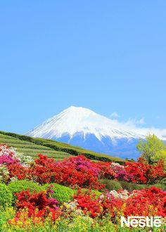 画像E 祝☆世界遺産登録♪いつか登るぞ~。Mt.Fuji♪