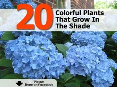 20 Colorful Plants That Grow In The Shade - http://www.hometipsworld.com/20-colorful-plants-that-grow-in-the-shade.html