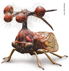 Brazilian treehopper this is a real insect. Strange