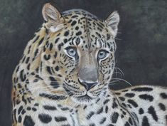 Giclee Print, Art Print, Amur Leopard, Endangered Species, Big Cats, Wildlife, Etsy Shop, Future, The Originals