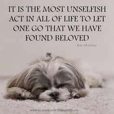 Miss my Shih Tzu Bella I Love Dogs, Puppy Love, Pet Loss Grief, Pet Sitter, Pet Remembrance, Dog Memorial, Animal Quotes, Pet Quotes, Pet Poems