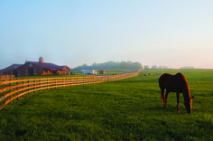 LBLHorse with Fence Line and Barnweb.jpg (429×285)