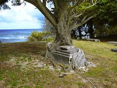 A banyan tree has merged with an ancient crypt at the historic cemetery in Kalaupapa National Historical Park on the Hawaiian island of Molokai. #tombs