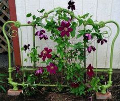Trellis for flowering vines? Or green beans if you grow veggies?