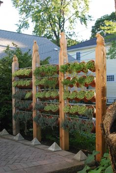 Privacy fence as vertical garden.  Designed and built by Barry Harrison, partner in Art-Harrison Design Studio