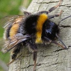 If i had a favorite bug it would be you oh Bumble bee defining what was meant to happen!