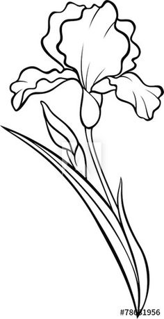 Flower Sketches, Art Drawings Sketches, Easy Drawings, Flower Line Drawings, Tattoo Drawings, Tattoos, Iris Painting, Fabric Painting, Painting & Drawing