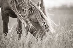 wild horses - Google Search