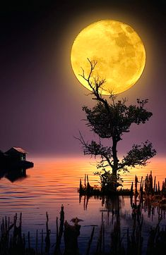 Beautiful moon over the lake! Beautiful Moon, Beautiful World, Moon Photography, Landscape Photography, Nature Pictures, Beautiful Pictures, Image Nature, Shoot The Moon, Moon Art