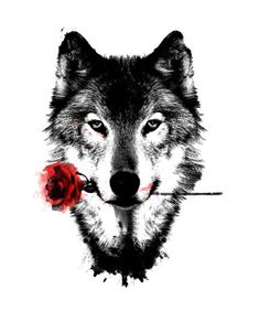Black Rose is the story of a romantic all be it barely sinister wolf. This massive wolf print is cool and barely menacing. He has retrieved the rose for his Wolf Tattoos, Maori Tattoos, Turtle Tattoos, Cross Tattoos, Cat Tattoos, Tatoos, Bad Wolf Tattoo, Tattoos Tribal, Phoenix Tattoos