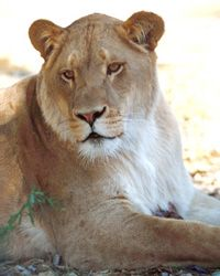 The Shambala Preserve presented by The Roar Foundation