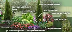 Клумбы непрерывного цветения – схемы с описанием цветов   Дизайн участка (Огород.ru)