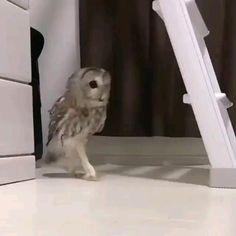 baby animals videos - e han klok eller! Funny Owls, Funny Parrots, Funny Birds, Cute Birds, Cute Funny Animals, Animal Jokes, Funny Animal Memes, Funny Animal Pictures, Cute Animal Videos