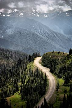 Hurricane Ridge, in Olympic National Park, Washington State