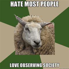 sociology sheep