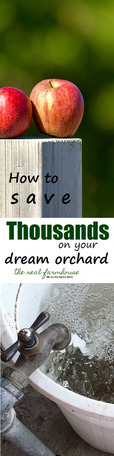 How to save thousands on your dream orchard. No need to be patient, start right now!