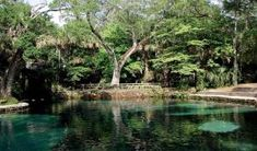 Juniper Springs Recreation Area in the Ocala National Forest is one of the oldest and best known recreation areas on the East Coast.