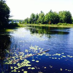 Hiawatha National Forest, Piatt Lake (the lagoon), Michigan!!! it's just one of those camp things....Hiawatha Youth Camp 2015❤️ gorgeous moments.