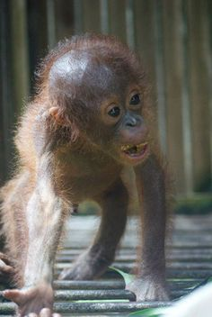 Rocky Adopt or donate @ http://redapes.org/