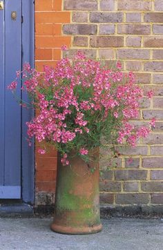 Love the plant and the rustic container ~diascia barberae Rock garden