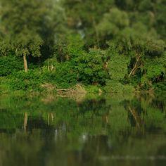 Kőtelek, Tisza part, ártér, erdősáv, idilli táj. Viharvadászatból tiszai sétává lett kirándulás eredménye. #river #water #mirror #nature #mik #mik_nature #termeszet #folyo #green #trees #instamood #atmosphere #dslr #pentax #summer – blogisztan az Instagramon Green Trees, Hungary, Land Scape, Vineyard, Nature Photography, River, Park, Amazing, Outdoor