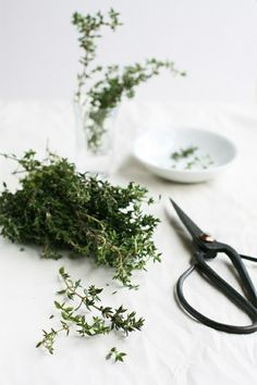thyme / photography: sneh roy : http://www.flickr.com/photos/50741194@N00/5956300667/