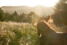 Hestene våre går på utegang hele året. Elephant, Photos, Animals, Pictures, Animales, Animaux, Elephants, Animal, Animais