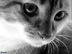 rostro-felino,-foto-en-blanco-y-negro-206590.jpg