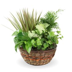 This funeral basket of easy-to-care-for greenery includes palm, Marginata, pothos, and more. Funeral Floral Arrangements, Flower Arrangements, Home Websites, Garden Basket, Tribute, Website Features, Funeral Flowers, Local Florist, Container Gardening