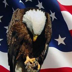 """America Honors & Remembers  ~♥~ """"I pledge allegiance to the flag, my heart to the soldier that defends it, and my never ending support to all who serve with him."""" - I will NEVER forget the price nor who paid the cost...~.♥~ love ...."""