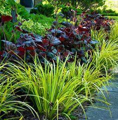 Purple heucheras with acorus Ogon- great foliage contrast. Small Gardens, Outdoor Gardens, Landscape Design, Garden Design, Heuchera, Woodland Garden, Garden Borders, Colorful Garden, Ornamental Grasses