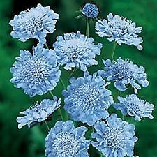Most Popular Garden Plants | eBay