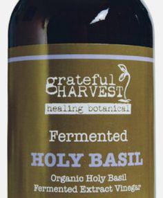 grateful harvest holy basil healing botanical