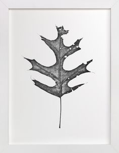King of the Forest by Glenn Carroll at minted.com