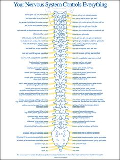 Spine nerve chart used by chiropractors show spinal nerve connections at each segmental level. The only posterior chiropractic spinal nerve function chart.Your central nervous system controls everything! Brain and Spinal Cord. Your spinal cord is pro Nursing Tips, Nursing Notes, Nursing Programs, Lpn Programs, Certificate Programs, Nursing Career, Accounting Certificate, Ob Nursing, Spine Health