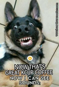 Pictures of the Day Top 50 Funny Internet Dog Memes - Funny Animal Quotes - - Pictures of the Day Top 50 Funny Internet Dog Memes The post Pictures of the Day Top 50 Funny Internet Dog Memes appeared first on Gag Dad. Cute Animal Memes, Funny Animal Quotes, Animal Jokes, Cute Funny Animals, Cute Baby Animals, Funny Pet Quotes, Hilarious Animal Memes, Scary Animals, Animals Dog