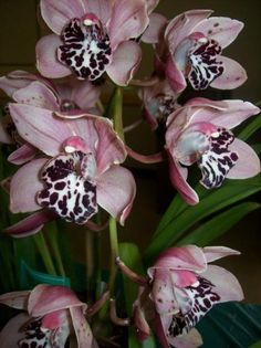 Orchid - Rachel's bouquet, but with the pink a more reddish hue