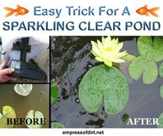 Easy trick for a sparkling clear pond - no chemicals, just a few household supplies >>>