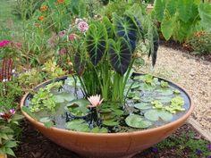 Container Pond, Container Water Gardens, Container Gardening Vegetables, Succulent Containers, Container Flowers, Mini Pond, Gemüseanbau In Kübeln, Patio Pond, Home Vegetable Garden