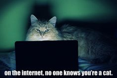 on the internet nobody knows youre a cat...hahaha