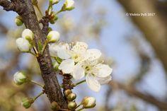 Benvenuta Primavera ...