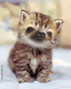 cute baby cat/sloth hybrid