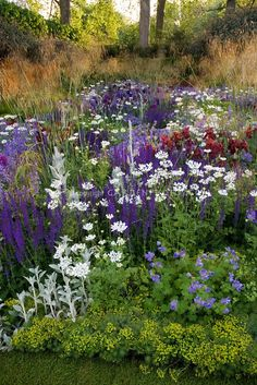 Purple and white color themed perennial garden-like salvia with daisies, artemesia & hardy geraniums