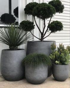 House Plants Decor, Patio Plants, Outdoor Planters, Indoor Plants, Outdoor Gardens, Succulent Planters, Succulent Arrangements, Indoor Gardening, Hanging Planters