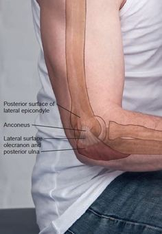 Posterior Surface Of Lateral Epicondyle Anatomical Landmark Anatomie Forearm Muscle Anatomy, Leg Muscles Anatomy, Human Body Anatomy, Yoga Anatomy, Human Anatomy And Physiology, Anatomy Study, Hand Therapy, Massage Therapy, Physical Therapy