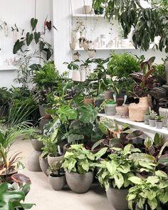 #plantstore #RooftopGarden